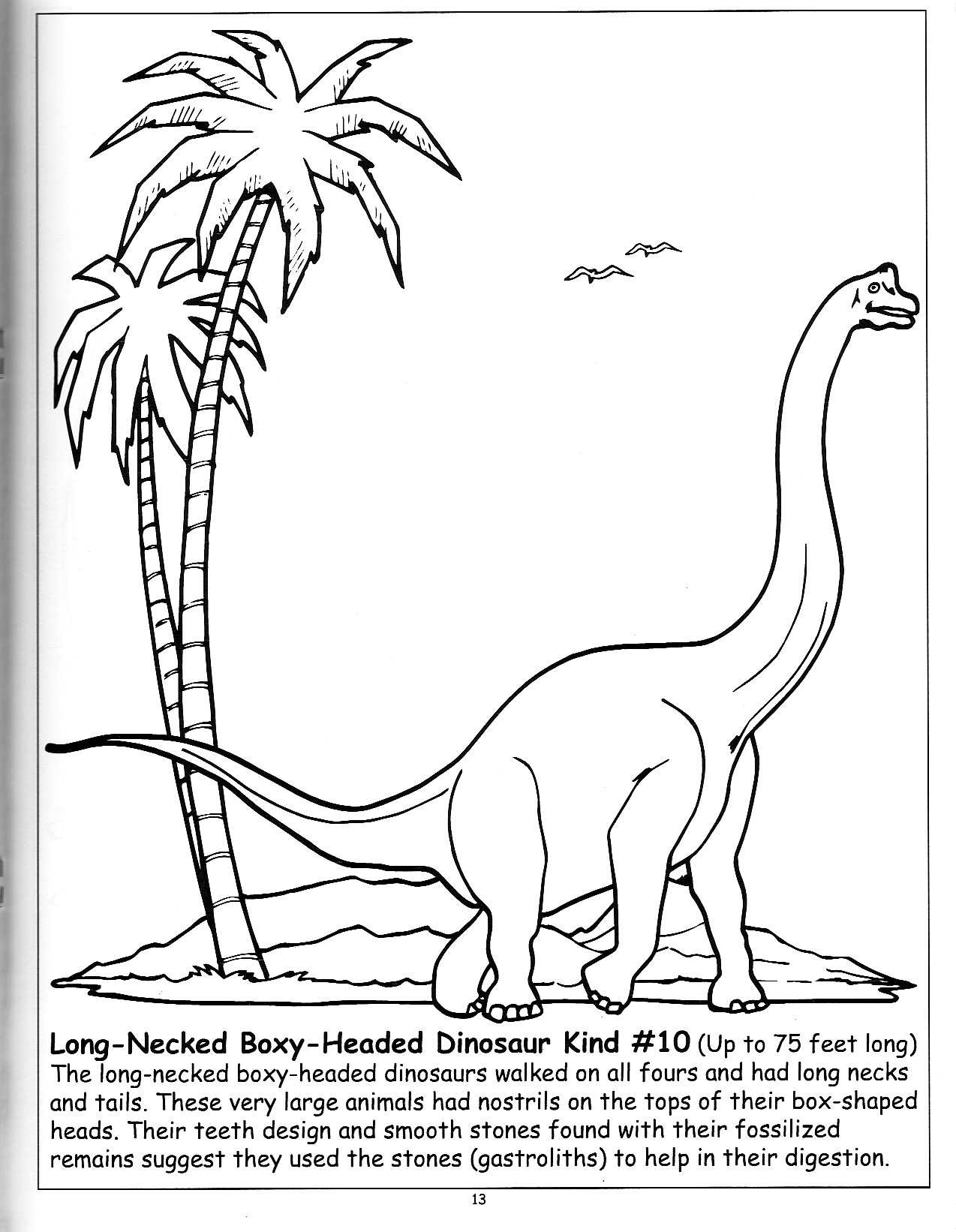 Coloring Activity Book For Guidebook To North American Dinosaurs